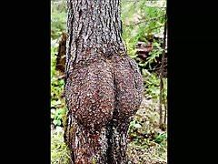 Funny Tree Shapes